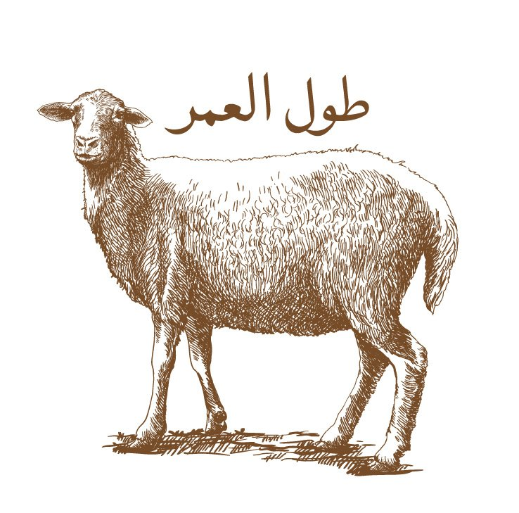 Aqa Moula Niyat Sheep