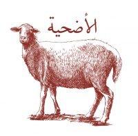 Udhiyyat Sheep